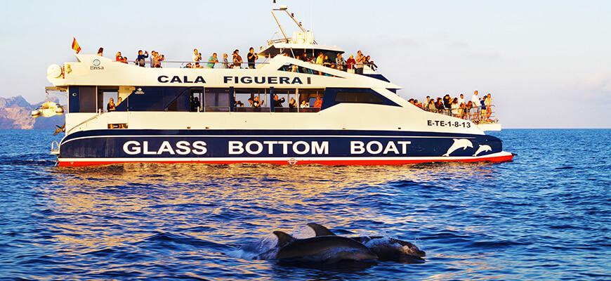 excursiones avistamiento delfines mallorca