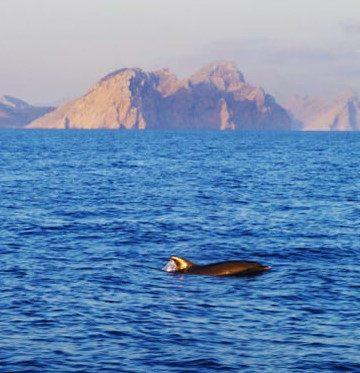 excursiones avistamiento delfines