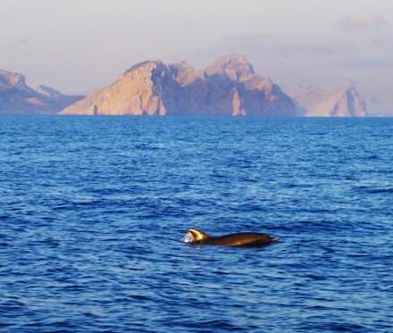 Excursiones de avistamiento de delfines en Mallorca