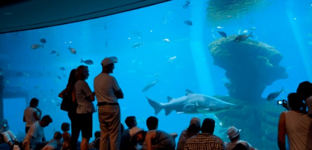 excursion navidad mallorca palma aquarium