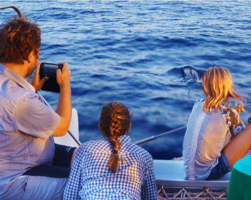 ver delfines en mallorca