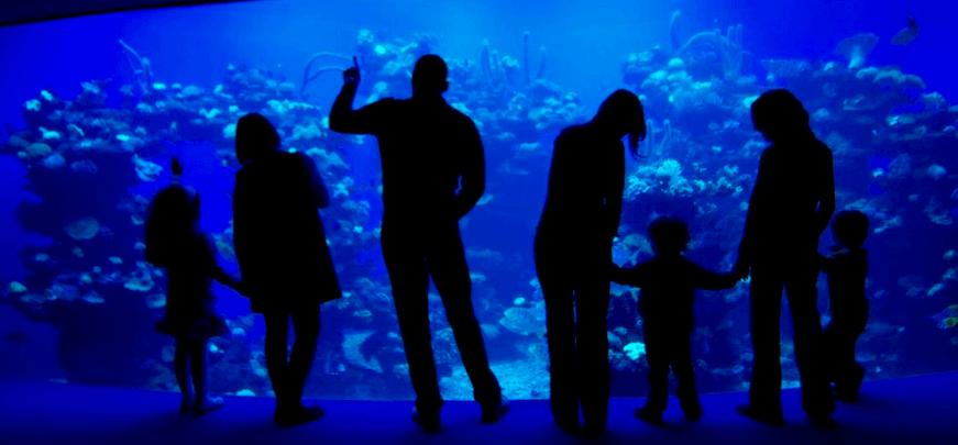 palma aquarium mallorca