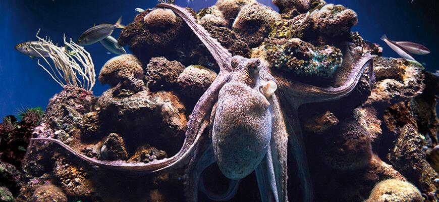 Palma aquarium: mar mediterráneo