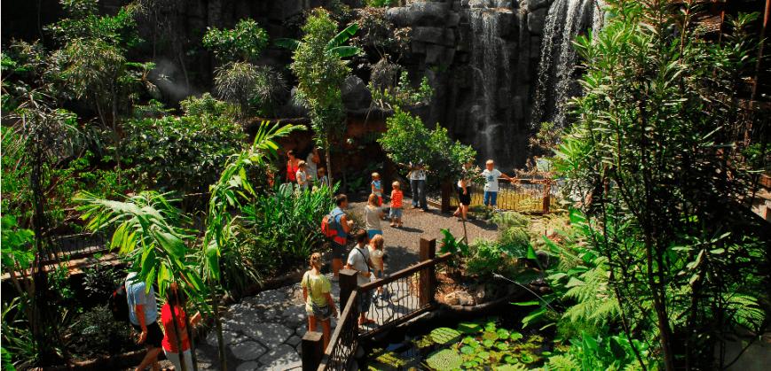 la jungla en Palma aquarium